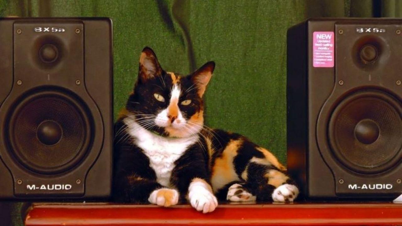 Mi pobre angelito gatuno: Un gato enciende el equipo de música y hace llamar a los policías