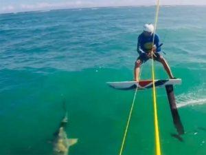 Surfista choca con un tiburón mientras entrena