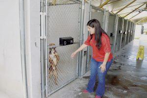 Destituyen a directora del Centro de Animales en Laredo