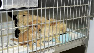 Realizan en Laredo evento de adopción de mascotas