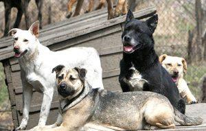Perros mestizos, los favoritos y más queridos en México