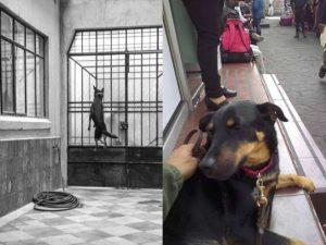 La verdadera historia de 'El Borras', el perrito de 'Roma'