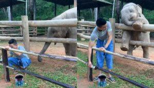 La tierna relación entre un elefante y su cuidador te conmoverá hasta las lágrimas
