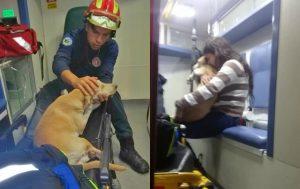 Salvan bomberos a perrito de un incendio