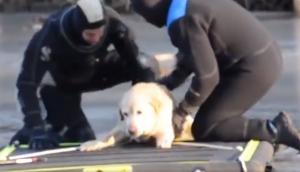 Bomberos rescatan a perrita que iba a morir congelada