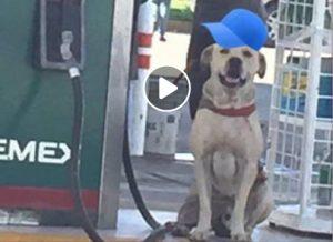 VIDEO: 'Randy' el perro héroe que enfrentó a asaltantes en Madero