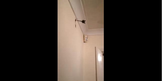 Mata a una araña con un dardo y lo acusan de maltrato animal (VIDEO)
