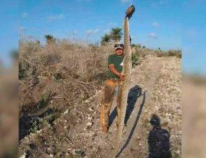 Matan enorme víbora de cascabel en San Fernando
