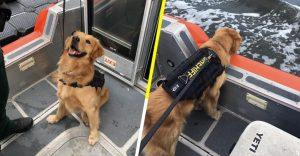 Perro sufre sobredosis tras olfatear drogas en un crucero de música
