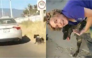 Mujer arrastra a un perro desde un auto (VIDEO)