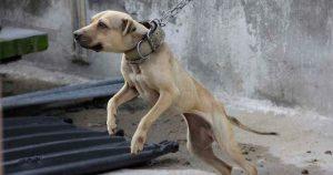 Cárcel para quien maltrate animales en Madero