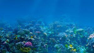 Temperatura de los océanos sube de forma imparable