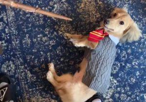 Perro realiza trucos con hechizos de Harry Potter