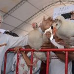 Regalan gansos a AMLO en acto de Campeche