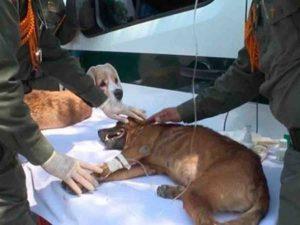 Policía de Colombia rescata perritos abandonados por venezolanos