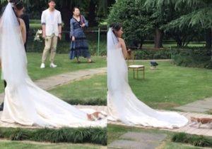 Gato no deja ir a novia durante su caminata al altar