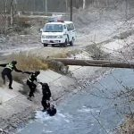 Oficiales crean cadena humana para salvar a niño de río