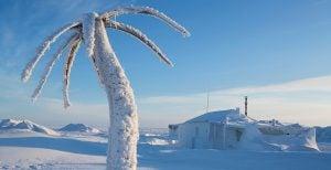 La última vez que las emisiones de CO2 fueron tan altas como ahora, el ártico tenía palmeras