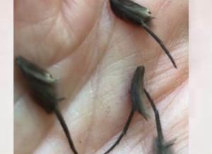 VIDEO: Encuentra extraños animales en su cocina