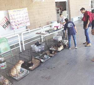 Buscan 30 hogares para los animalitos