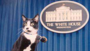 Socks, el felino que inspiró el Día Internacional del Gato