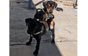 Agencia de autos adopta y 'contrata' cachorros como personal de seguridad