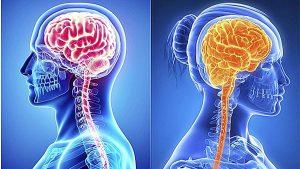 El cerebro de mujeres es más jóven que el de hombres, revela estudio