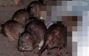 Localizan cadáver de bebé que estaba siendo devorado por roedores