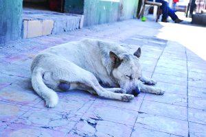 Abandonan un perro cada cuatro horas
