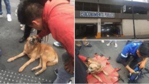 Lanzan a perritos callejeros desde un piso 2 y matan a uno