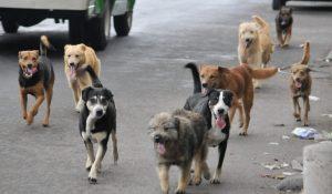 Matan 400 perros para alimentar gatos en experimento de EU
