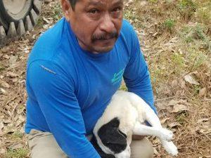 'Recen para que mis cachorros descansen; Dios los perdone por envenenarlos'