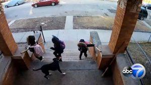 Graban ataque de un perro contra varios niños en Estados Unidos