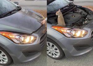 Escuchaban un sonido extraño en su camioneta y descubren esto