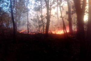 Combaten incendios forestales en Michoacán