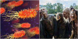 """Científicos descubren """"estado zombie"""" dentro del cuerpo humano"""
