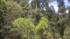 Rescatan a estudiantes del Tec de Monterrey perdidos en un bosque