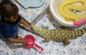 VIDEOS: Sorprende niña cepillando los dientes y maquillando a cocodrilo