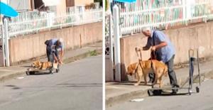 Un hombre pasea todos los días a su perro discapacitado en un carrito