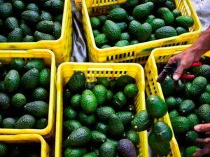 Retiran aguacates de mercado en EU por temor de listeria
