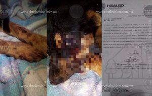 Adolescentes matan a golpes a un perro en Ciudad Hidalgo, Michoacán