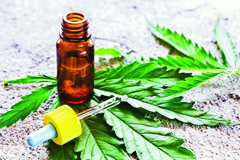 Causa furor la cannabis medicinal