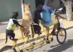 VIDEO: Bici 'perruna' cuádruple se hace viral