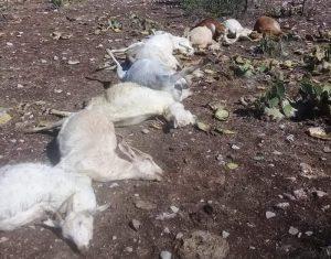 Granizada en Jiménez mata ganado y deja daños materiales