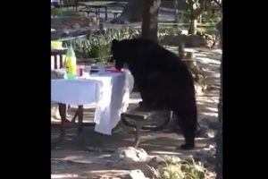 VIDEO: Captan a oso en Chipinque