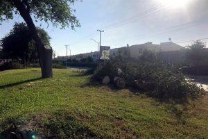 Mutilan árboles por fiesta en Apodaca