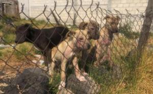 Jalisco castigará hasta con 3 años de prisión el maltrato animal