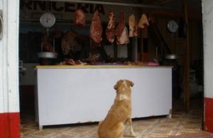 Carnicero acuchilla y mata a un perro que pedía alimento