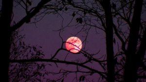 """Este viernes santo se podrá observar la """"luna rosa"""""""