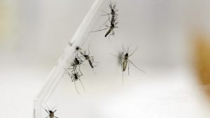 Descubren método de invisibilidad humana ante los mosquitos